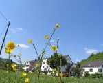 Blumen in der Wiese